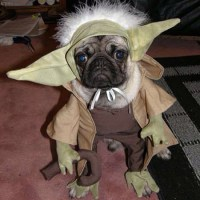 The gallery for --> Yoda Cat Costume