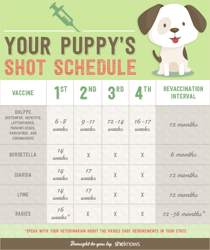 How Old Is The Calendar First Grade Best 25 First Grade Calendar Ideas On Pinterest Keep Your Puppy Healthy With This Vaccination Schedule
