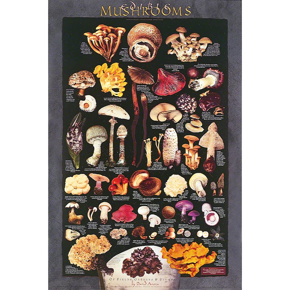 Poster Cuisine Cultivated Mushrooms Poster