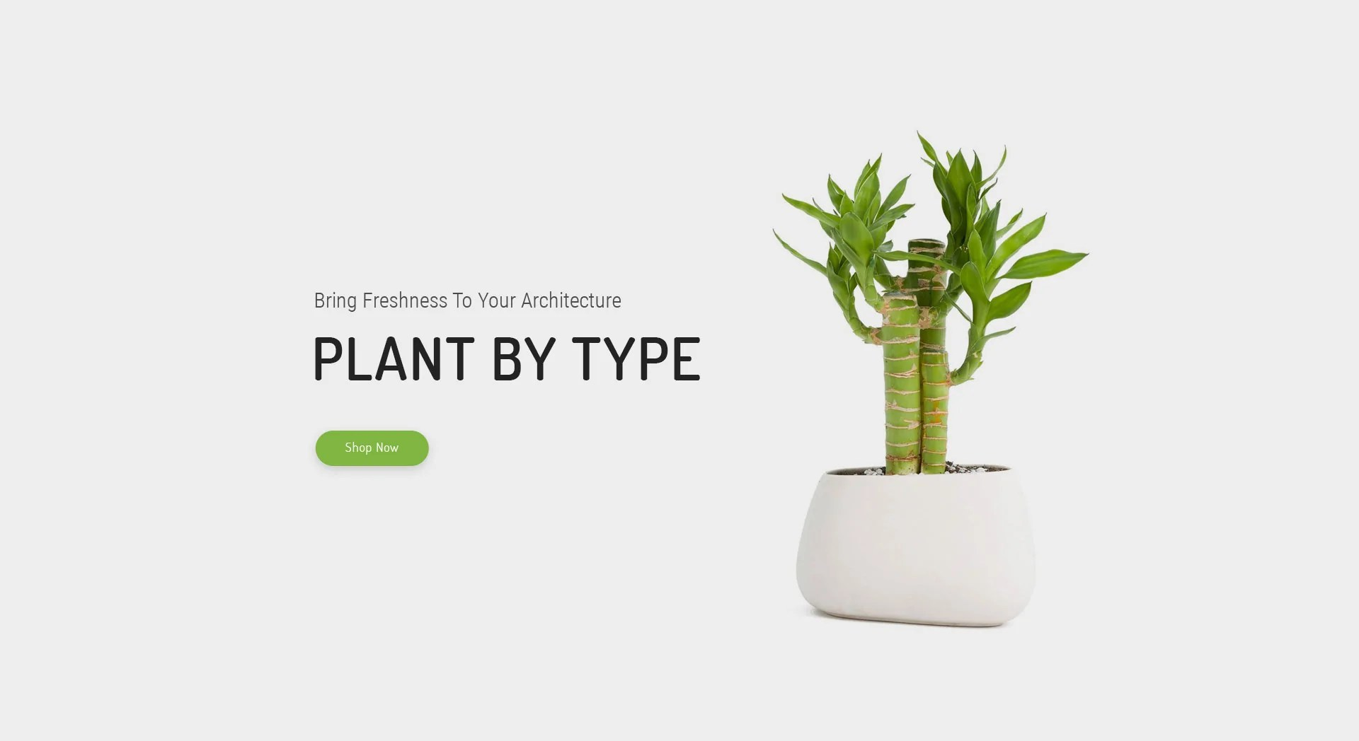 Unusual House Plants For Sale Indoor Plants Buy House Plants Online Home Of Houseplants