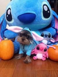 Page Not Found | PupLife Dog Supplies