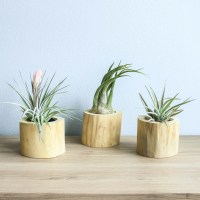 Air Plant Containers - Air Plant Supply Co.