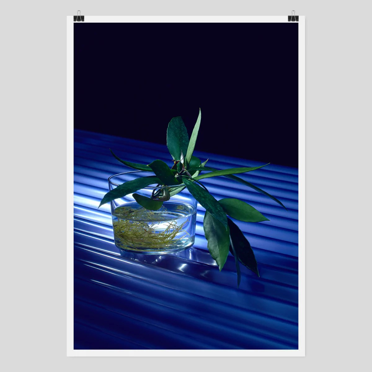 Poster Online Kaufen Cion 1, Limited Edition Framed Photography Print By Edition3000 – Edition3000