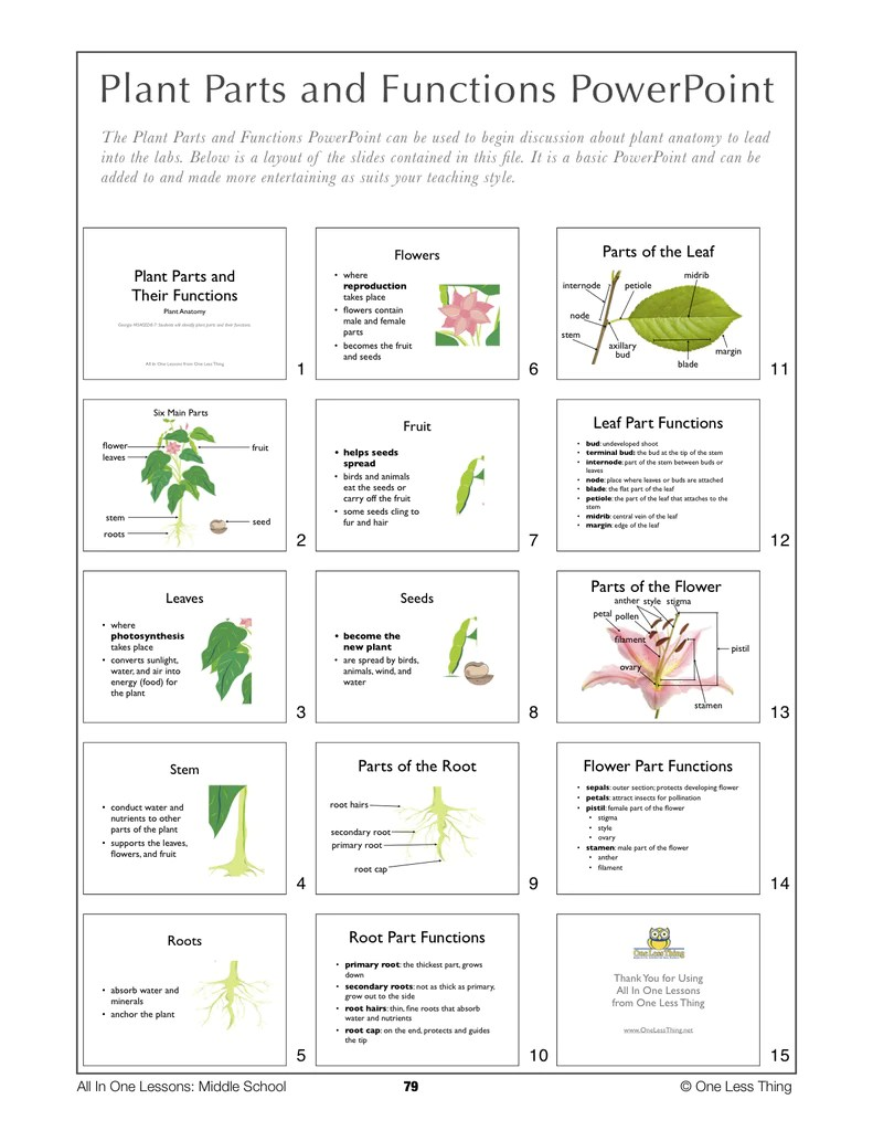 Flower In Plants Function – Plant Structure and Function Worksheet