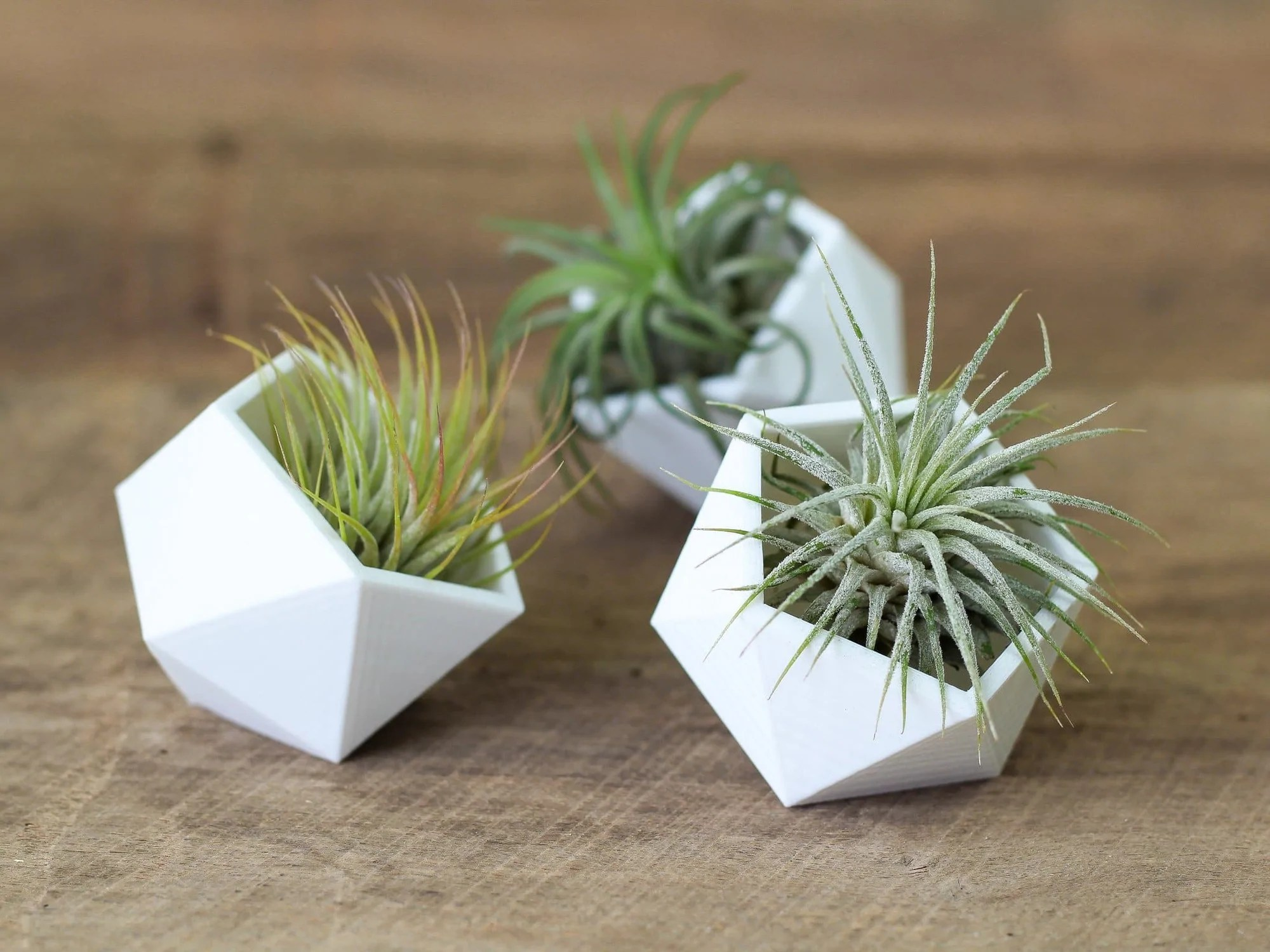 Cubicle Plant Holders Modern Geometric Air Plant Holders Air Plant Design Studio