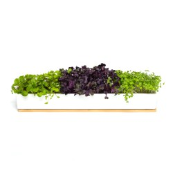 Small Crop Of Window Sill Planter
