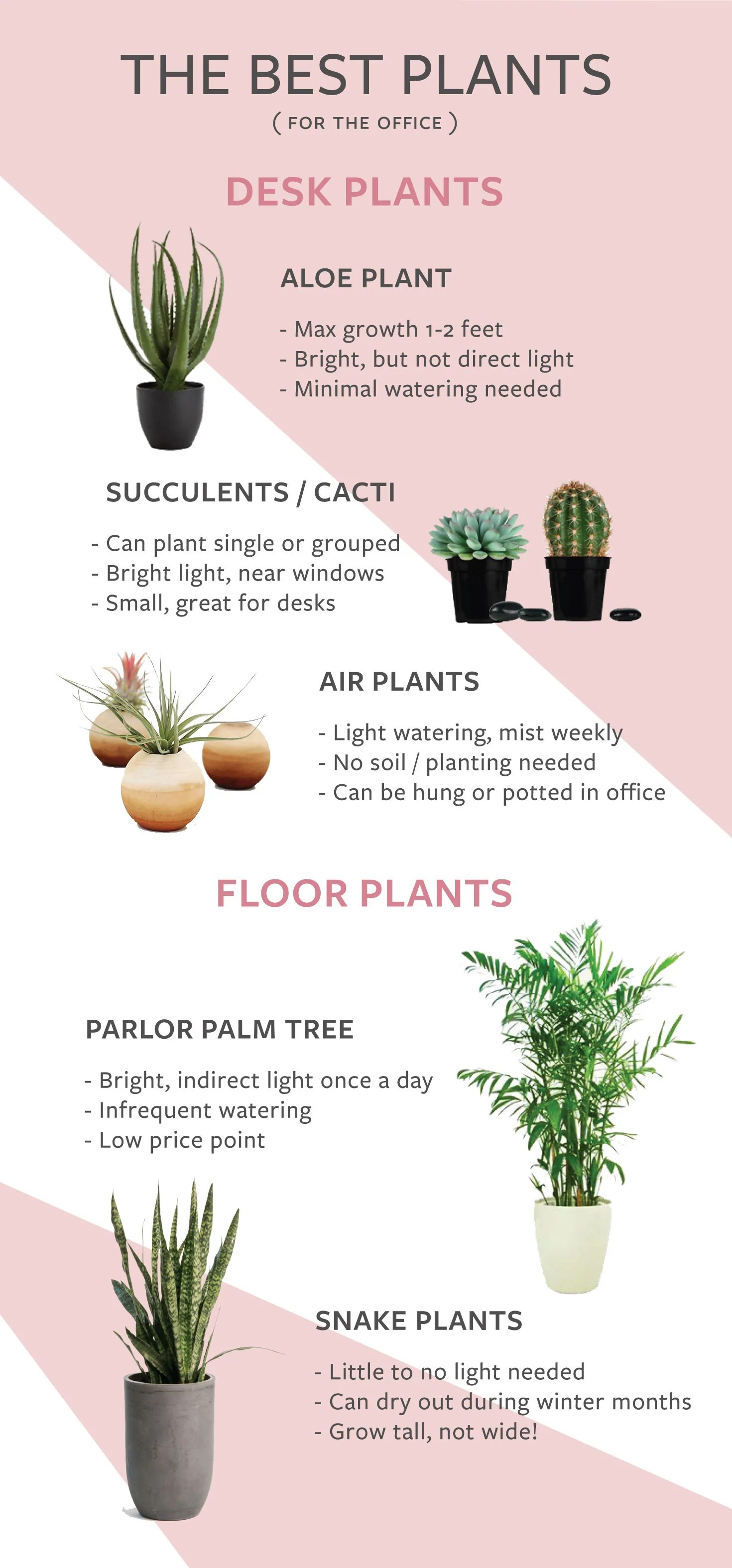 Indoor Plants For The Office The Best Indoor Plants To Keep In The Office Numi