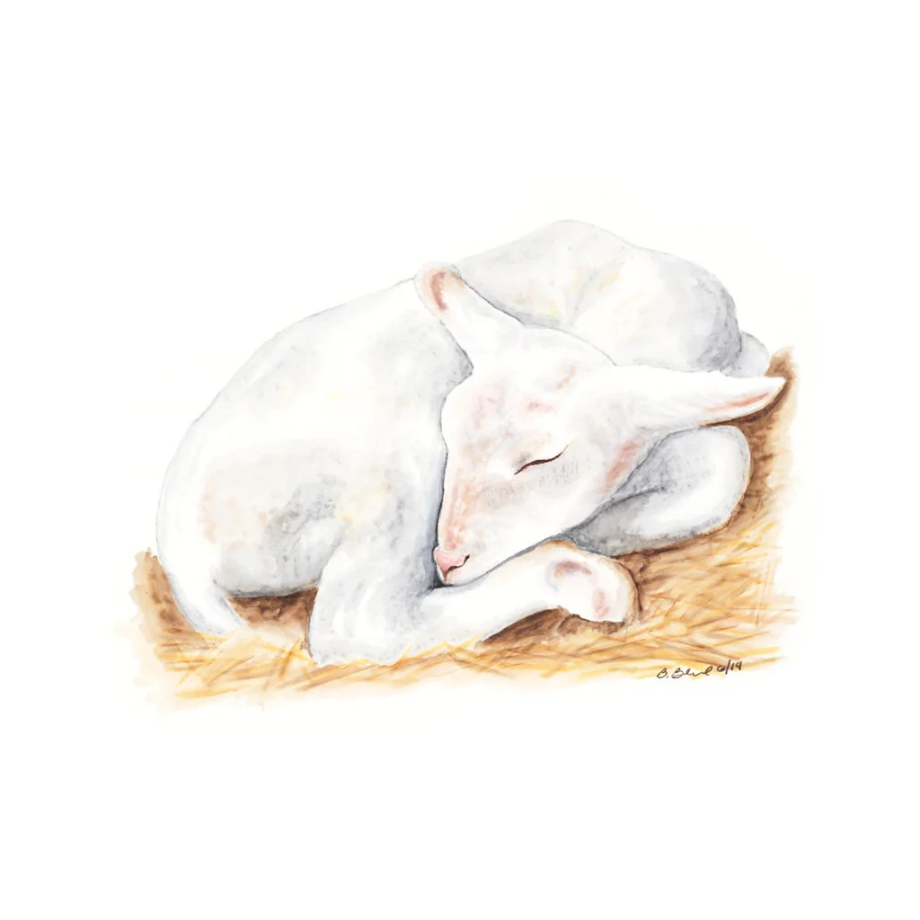 Baby Lamb Drawing Sleeping Baby Lamb Nursery Art Tiny Toes Design