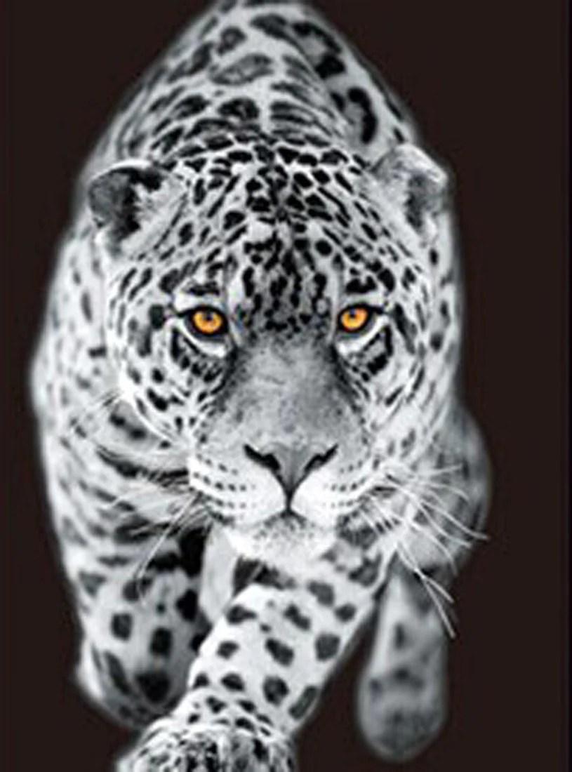 Animal Wild Wallpaper Hd 3d Leopard White Tiger Lion 3d Flip Matted Or Framed Black