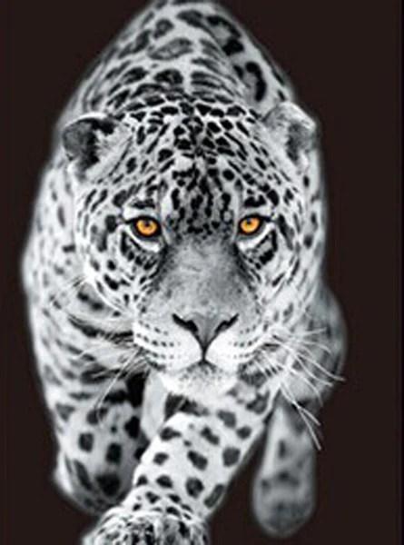 Black Animal Print Wallpaper Leopard White Tiger Lion 3d Flip Matted Or Framed Black