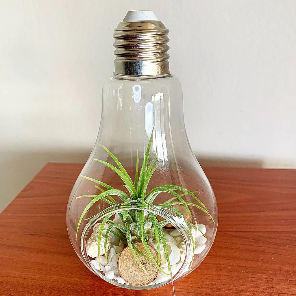 Lamp Plant Light Bulb Terrarium