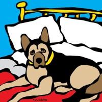 German Shepherd on Bed Print - Marc Tetro