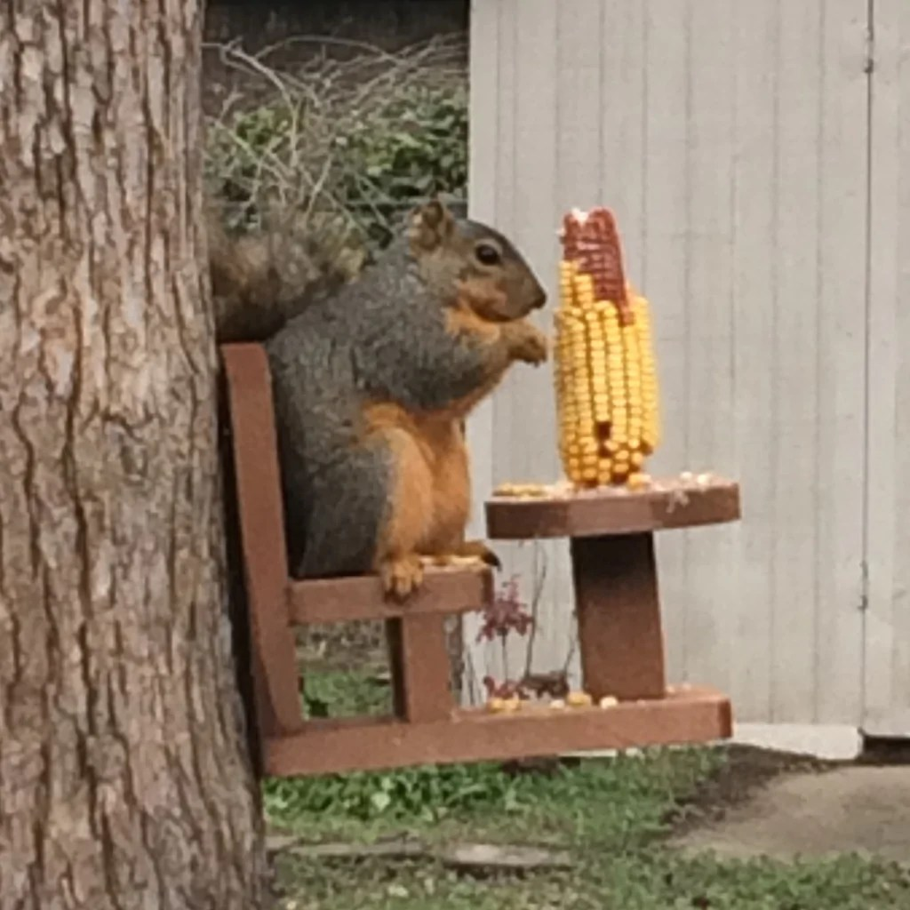 Totenkopf Sessel Table And Chair Squirrel Feeder For Corn Cobs The
