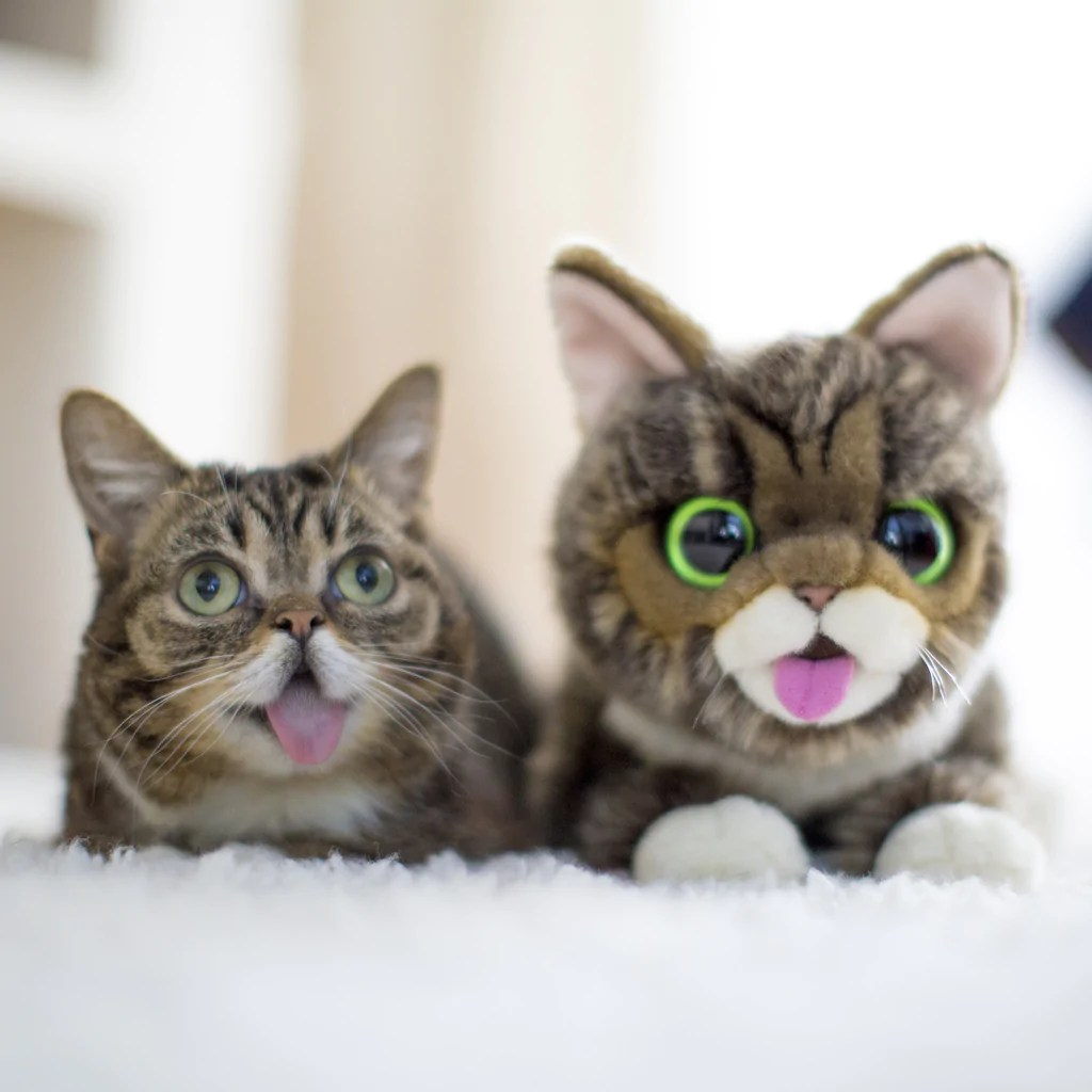 Cat Plush Toy Lil Bub Plush Original