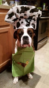 47 cute, fun, and scary Halloween costumes for your Boxer ...