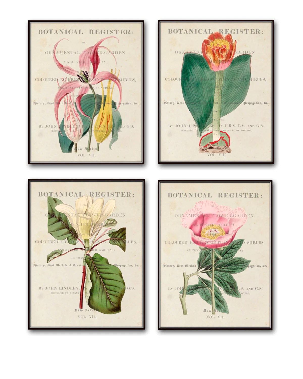 Wall Art Prints And Posters Vintage Botanical Print Set No 12 Giclee Canvas Art Prints Antique Botanical Prints Wall Art Prints Posters Botanical Print Sets