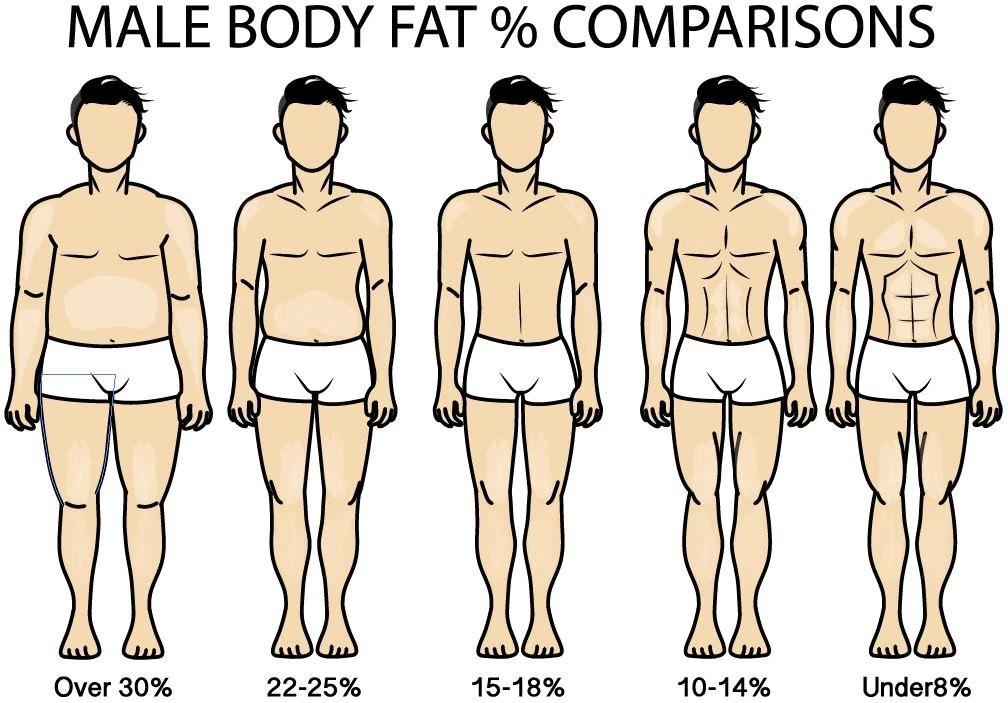 Male Full Body Fat Diagram Basic Guide Wiring Diagram