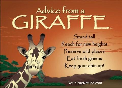 Fall Tree Desktop Wallpaper Advice From A Giraffe Jumbo Magnet Your True Nature Inc