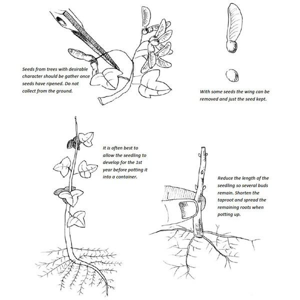 air wiring bonsai pots