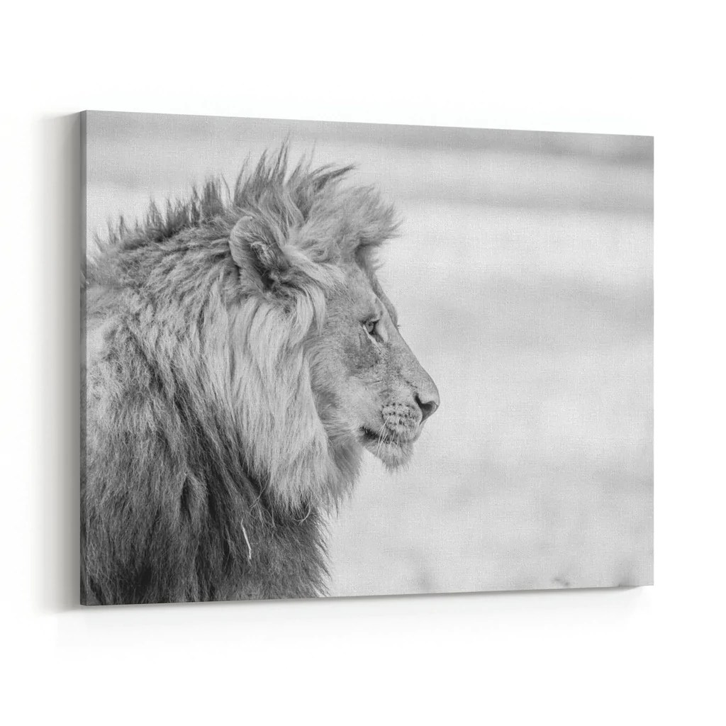 Black And White Canvas Pictures Lion Side Profile In Black White Canvas Wall Art Print