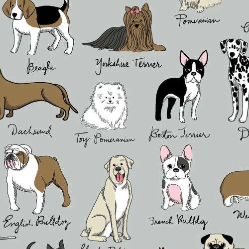 Medium Of French Dog Breeds