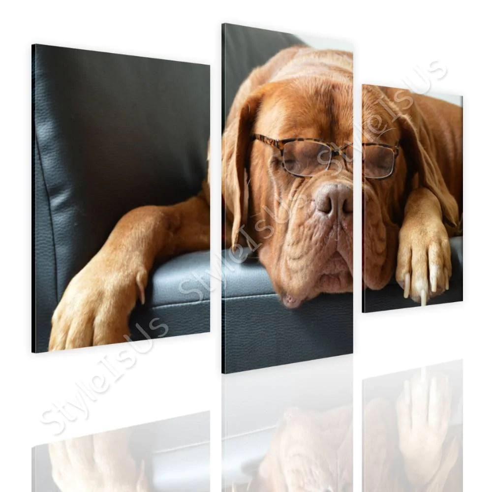 Stickers Bordeaux Split 3 Panels Dog With Glasses 3 Panels Canvas Posters Prints Stickers Styleisus
