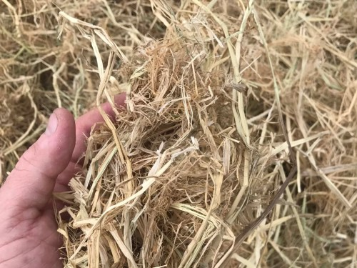 Medium Of Straw Vs Hay
