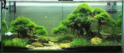 How To Create A Beautiful Aquascape Exotic Aquaristic