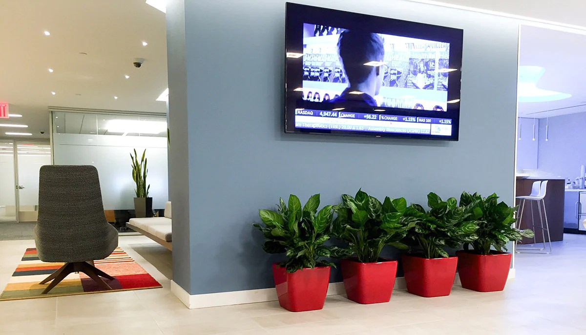 How To Decorate Your Office How To Choose Best Plants For Your Office My City Plants