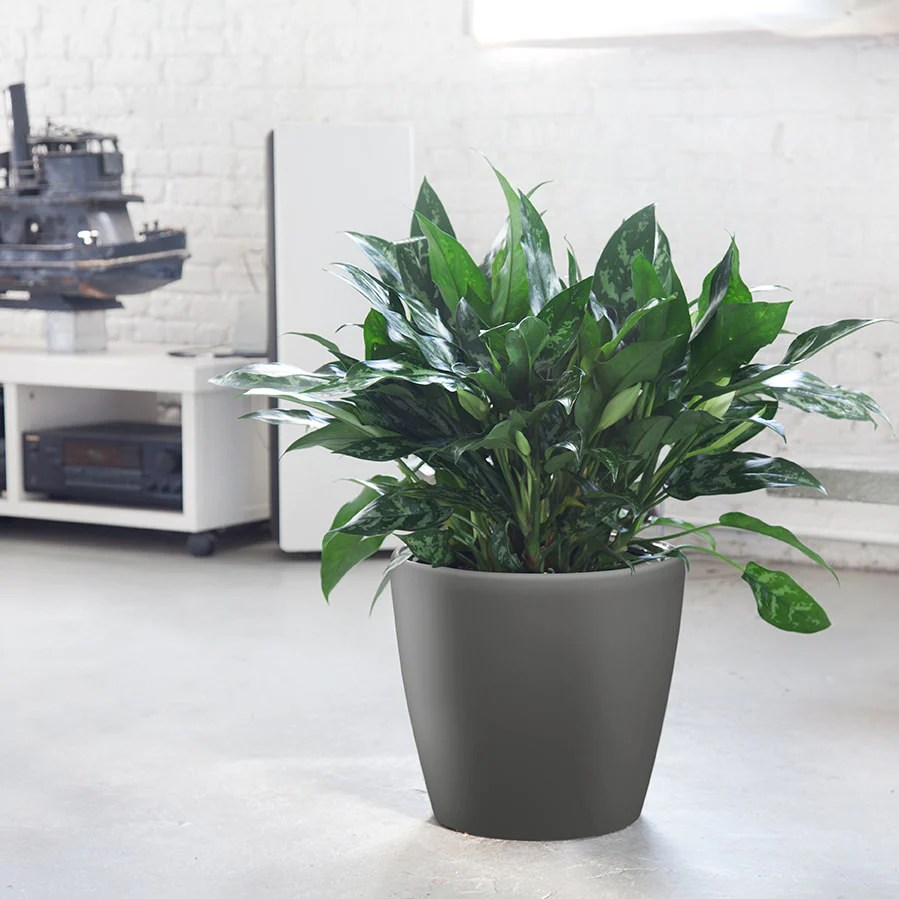 Where To Buy Indoor Plants Online All Plants Indoor Plants Online Store My City Plants