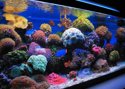 Coral Reef Wallpaper Hd Nano Reef Tank 5 Things You Need To Know