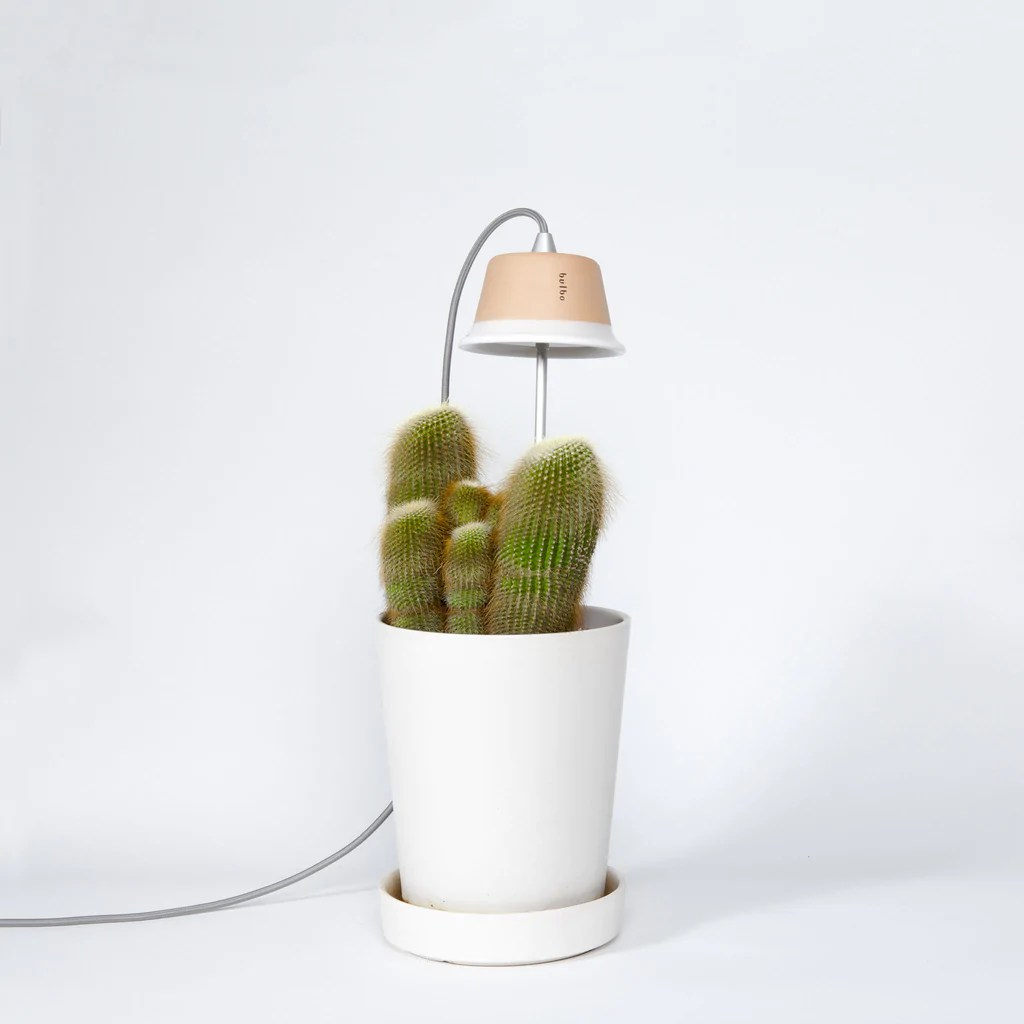 Lamp Plant Led Lights And Products For Indoor Gardening By Bulbo Bulbo