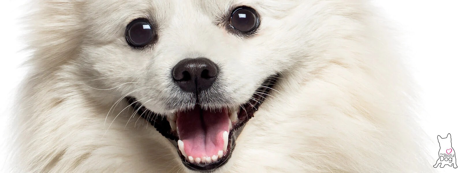 Perfect Your American Eskimo Nose American Eskimo Nose Butter Made Usa Balm Your Dry Nose Dog Dry Nose Cracked Dog Dry Nose Cream Nose All Moisturizing Goodness bark post Dog Dry Nose