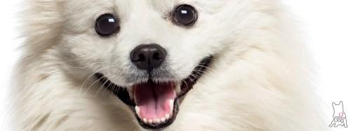 Medium Of Dog Dry Nose