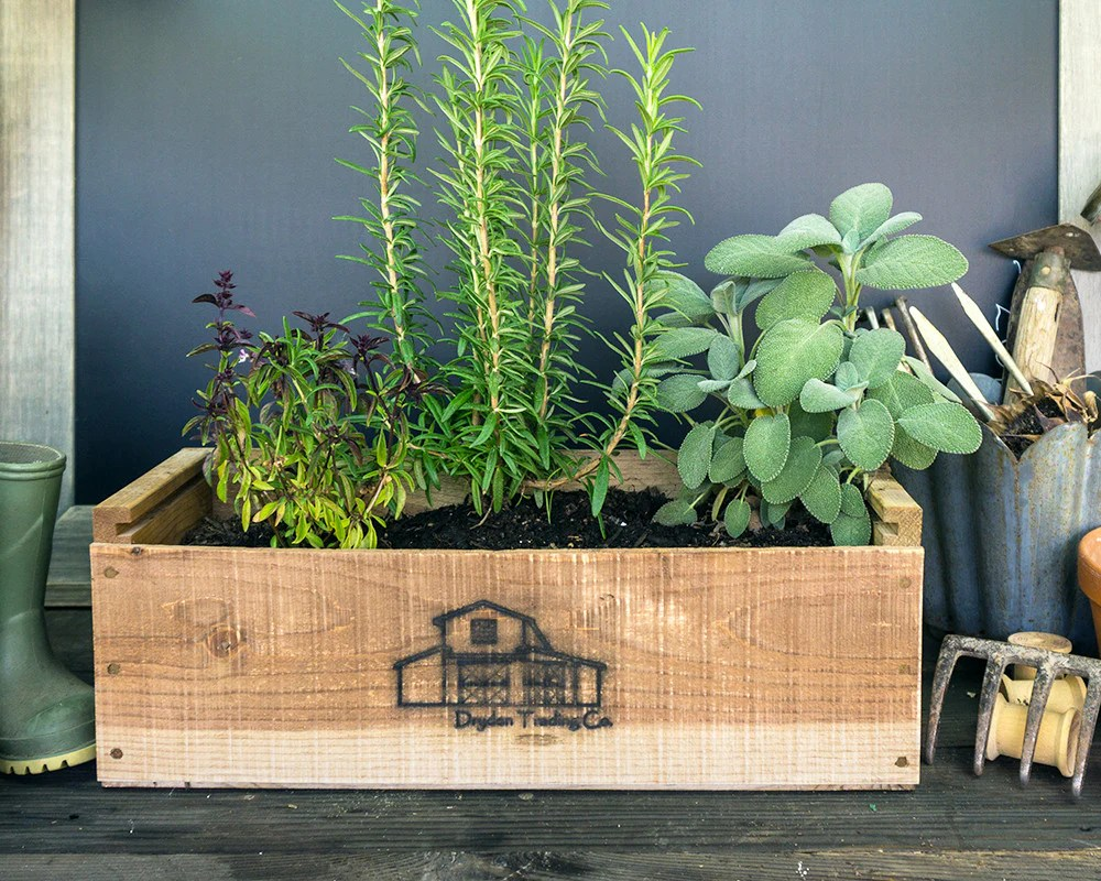 Planter For Herbs Shabby Chic Planter Box Herb Kit Indoorherbkits