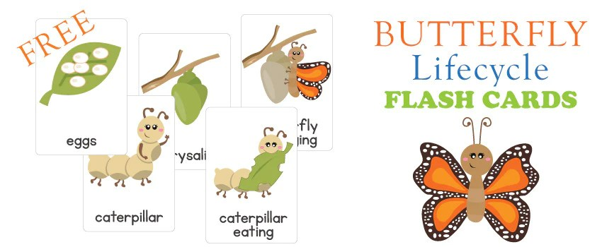 Software Release Life Cycle Wikipedia Freebie Friday – Life Cycle Of A Butterfly Flash Cards
