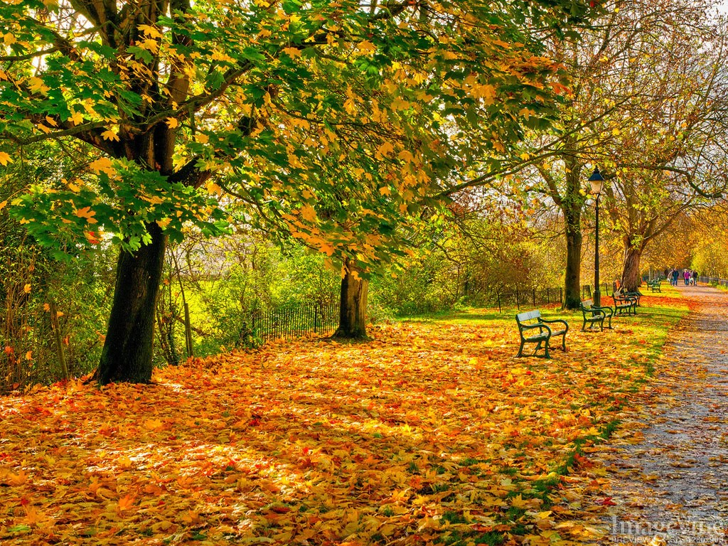 Fall Leaves Wallpaper Free Autumn Dreams Backgrounds Imagevine