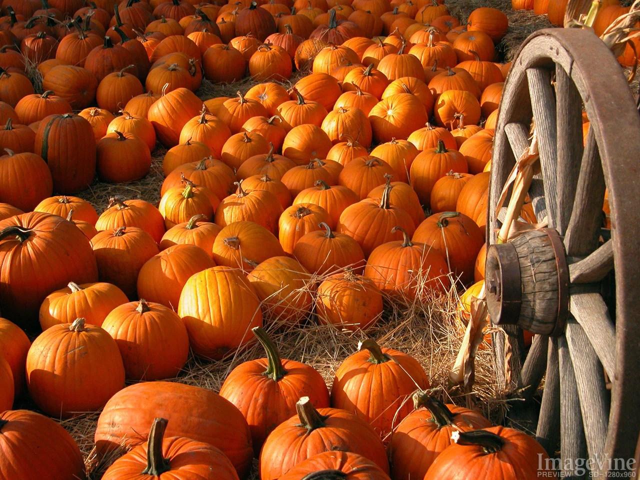 Fall Pumpkin Desktop Wallpaper Free Thanksgiving Backgrounds Imagevine