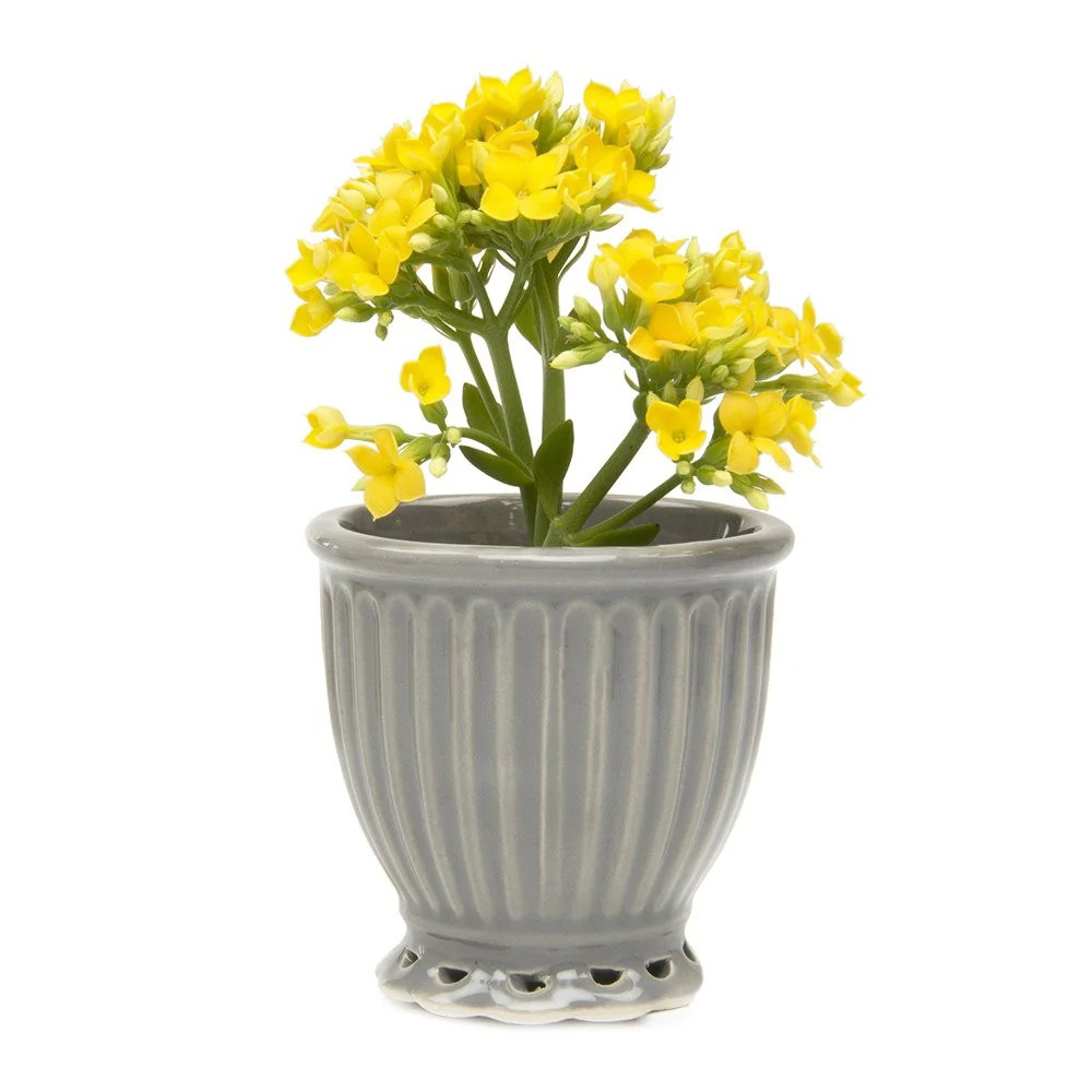 Small House Plants With Flowers Brilliant