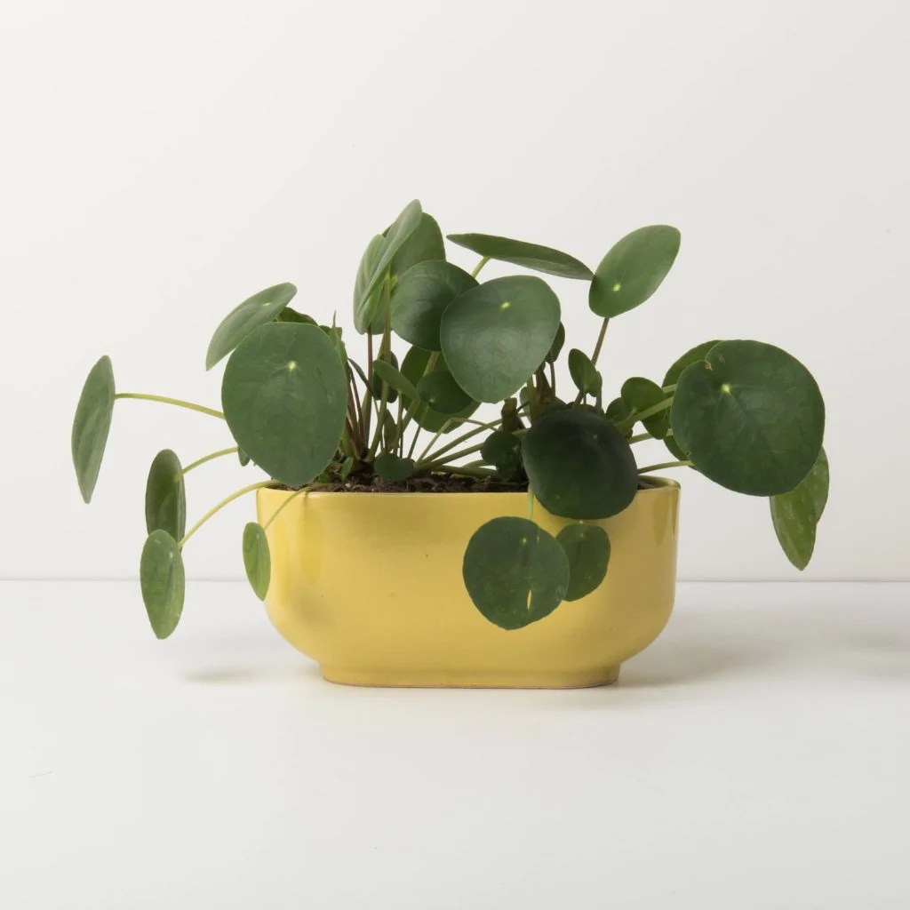 Urban Nature Interieur Planter Raffia