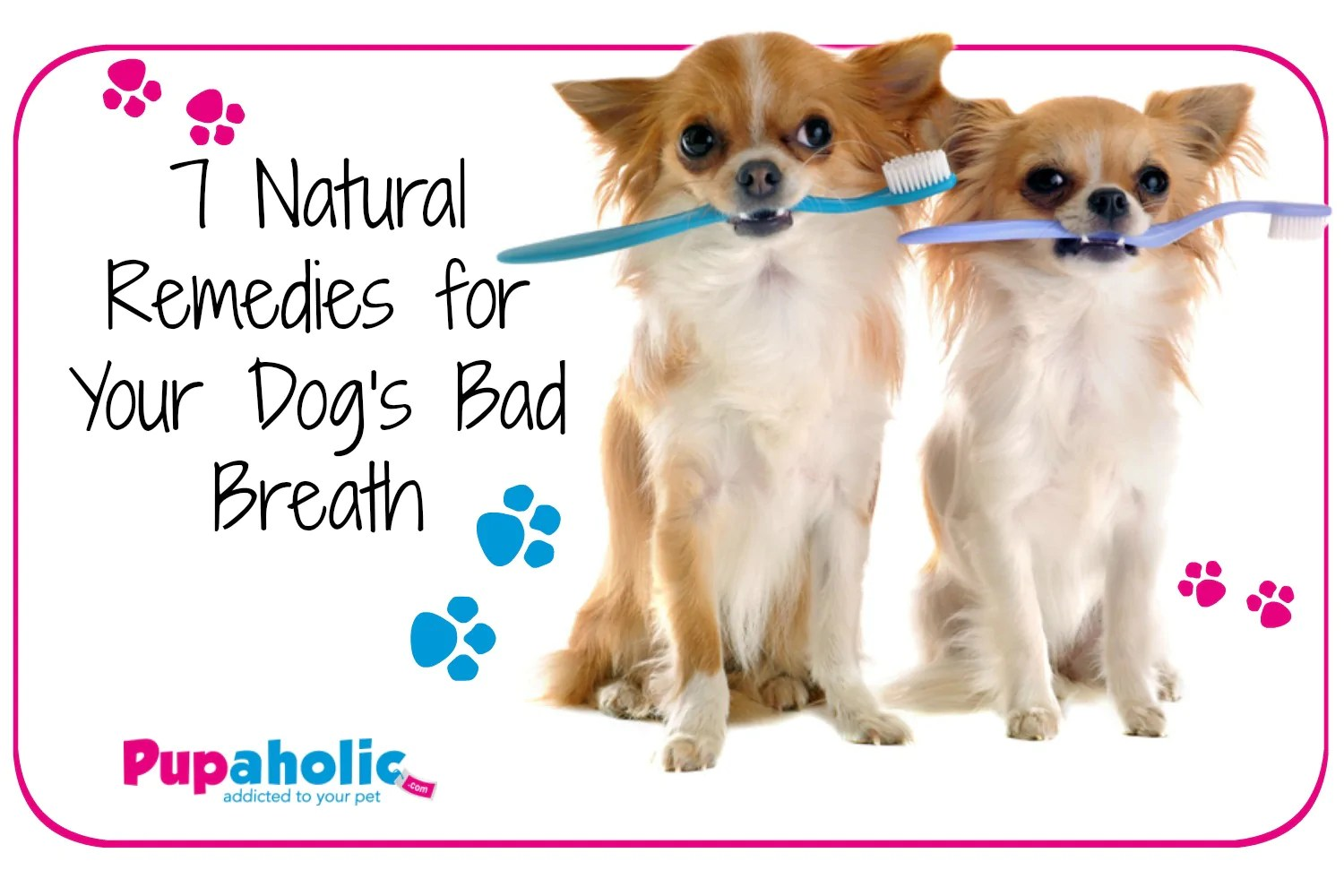 Lummy Your Bad Breath Remedies Remedies Your Bad Breath Bad Dog Breath Remedy Bad Dog Breath Fix bark post Bad Dog Breath