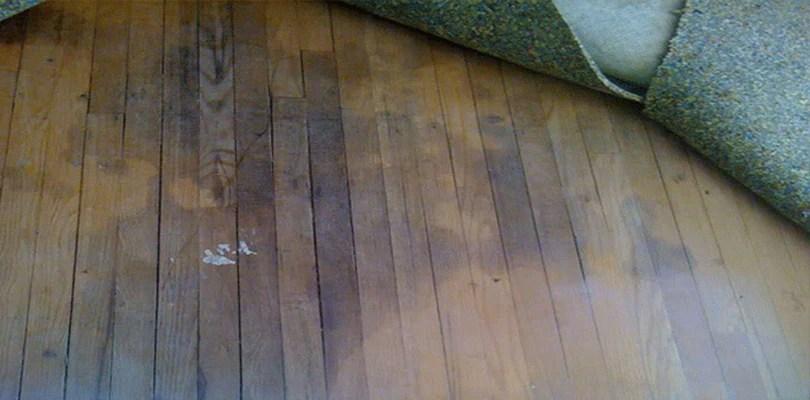 Moisture Hardwood Floors Dont Mix Universal Hardwood