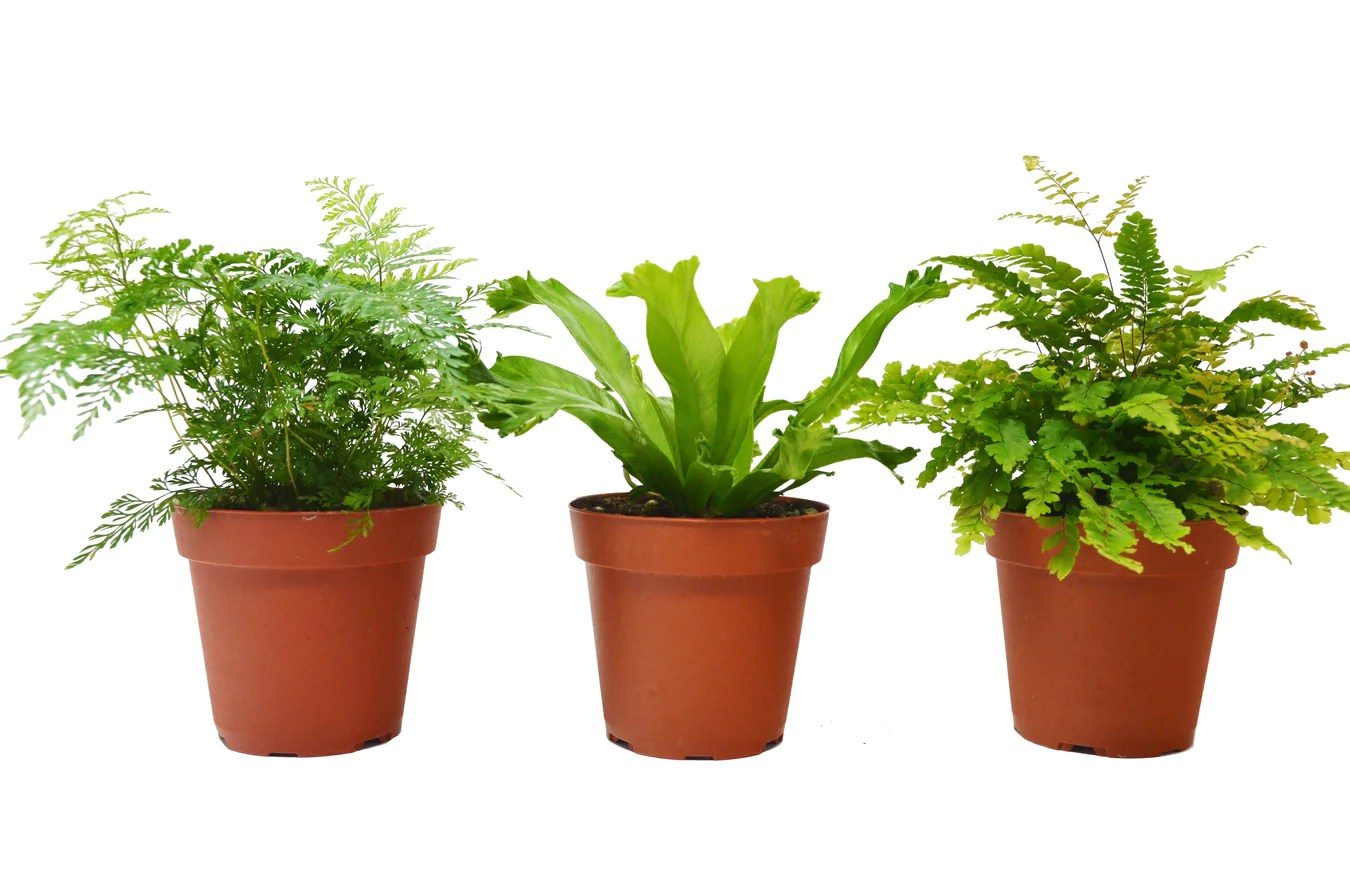Unusual House Plants For Sale House Plant Shop Fast Shipping Nationwide Guarantee On All Plants