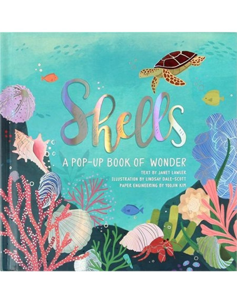 Pop Up Book Cover Shells A Pop Up Book Of Wonder
