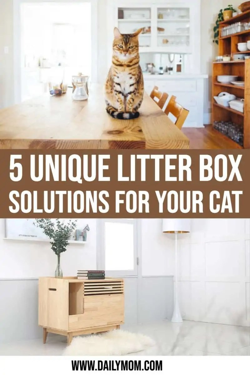 5 Cat Litter Box Furniture Solutions You Did Not Know Existed Read Now