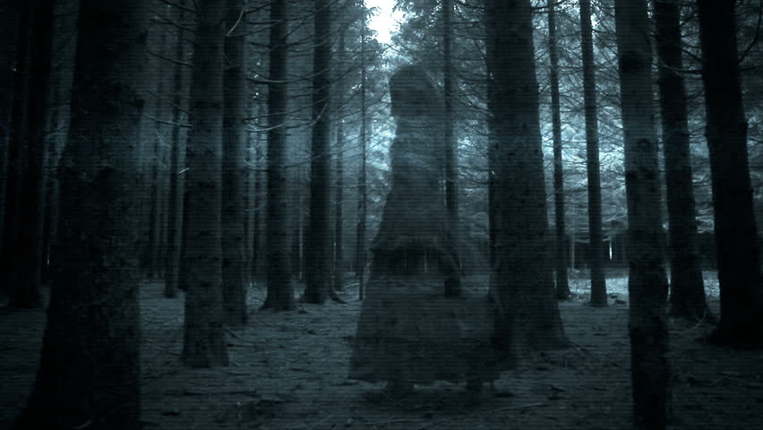Black And White Tree Wallpaper Once Upon A Time Steadicam Shot Through Dark Creepy Forest Stock Footage