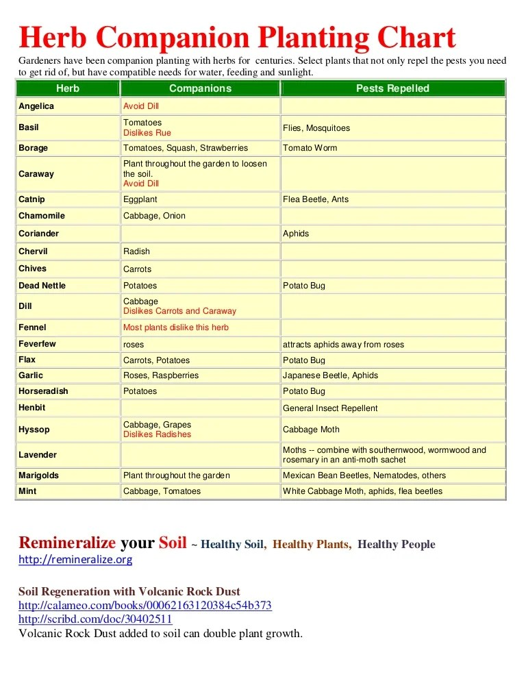 Herb Companion Planting Chart - Herbal Gardens