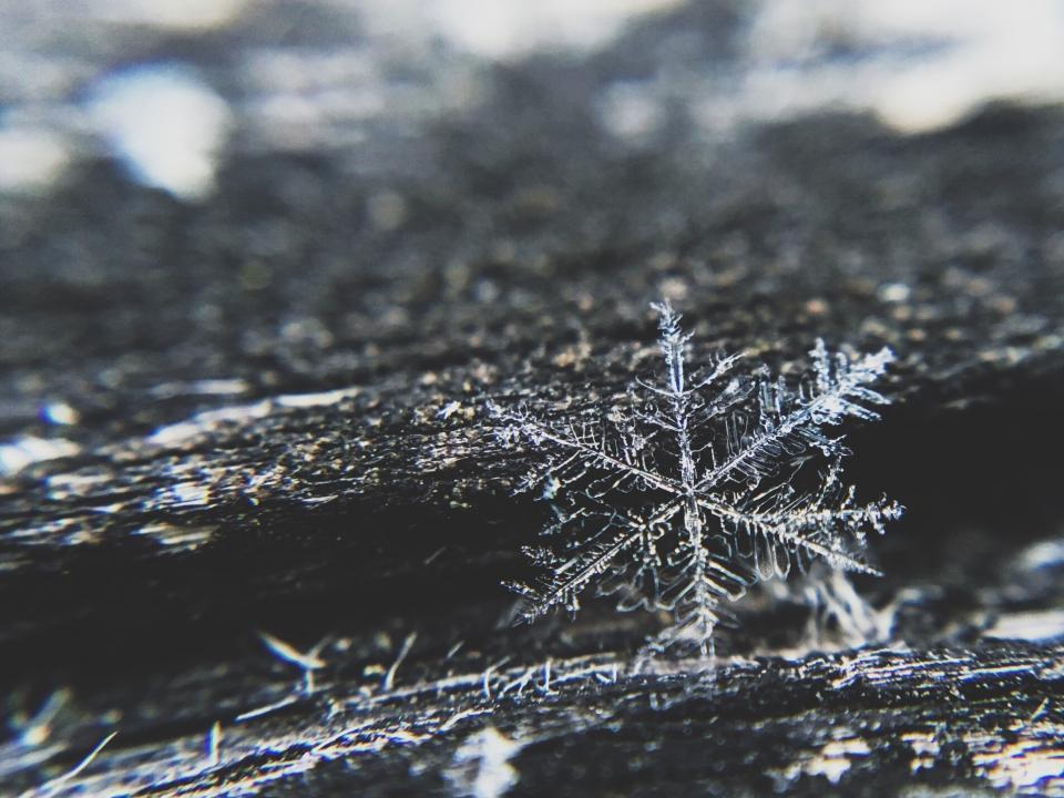 Free Fall Bc Nature Wallpaper Free Photo Of Snowflake Ice Winter Stocksnap Io