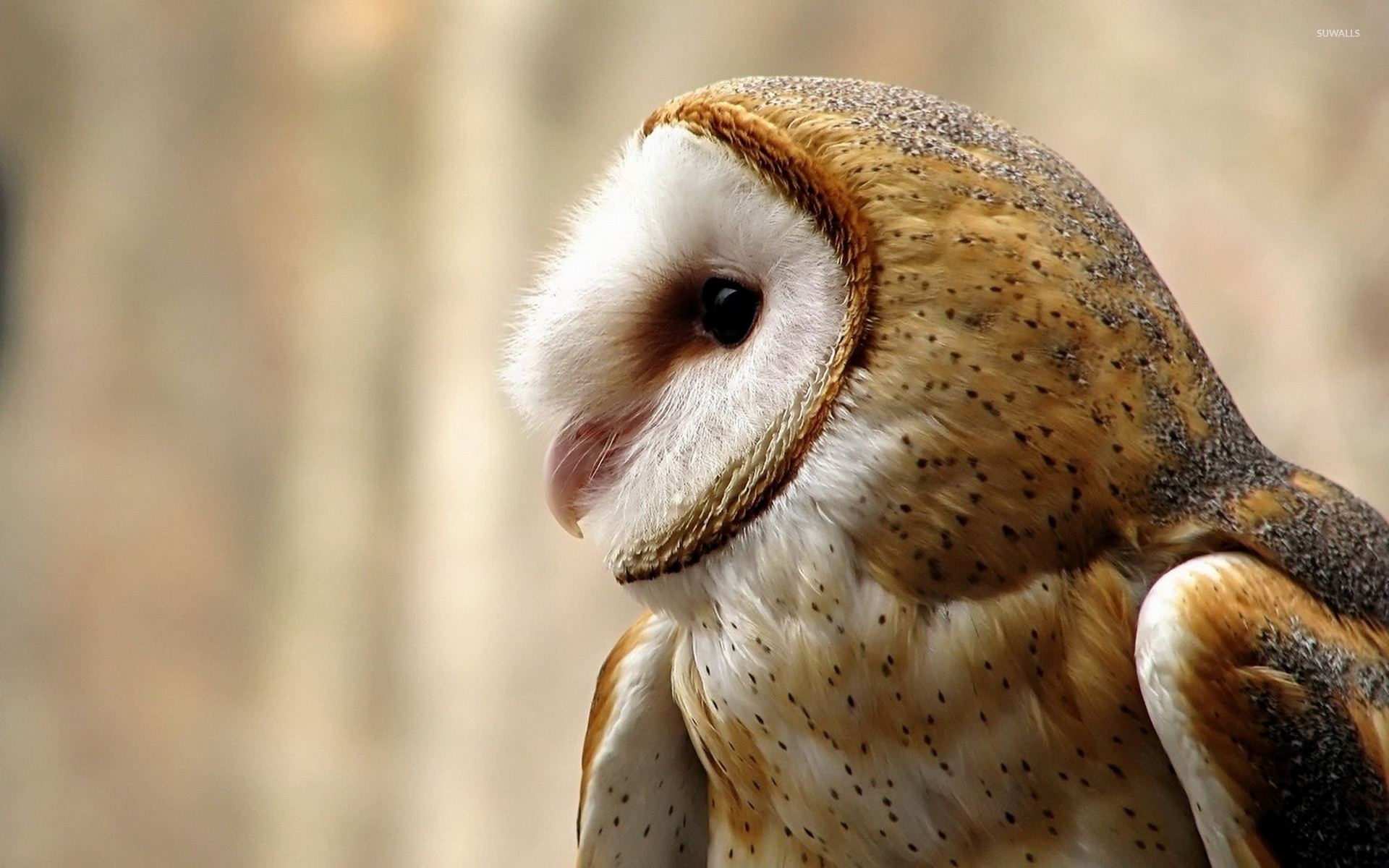Cute Owl Wallpaper With Quotes Barn Owl Wallpaper Animal Wallpapers 37237