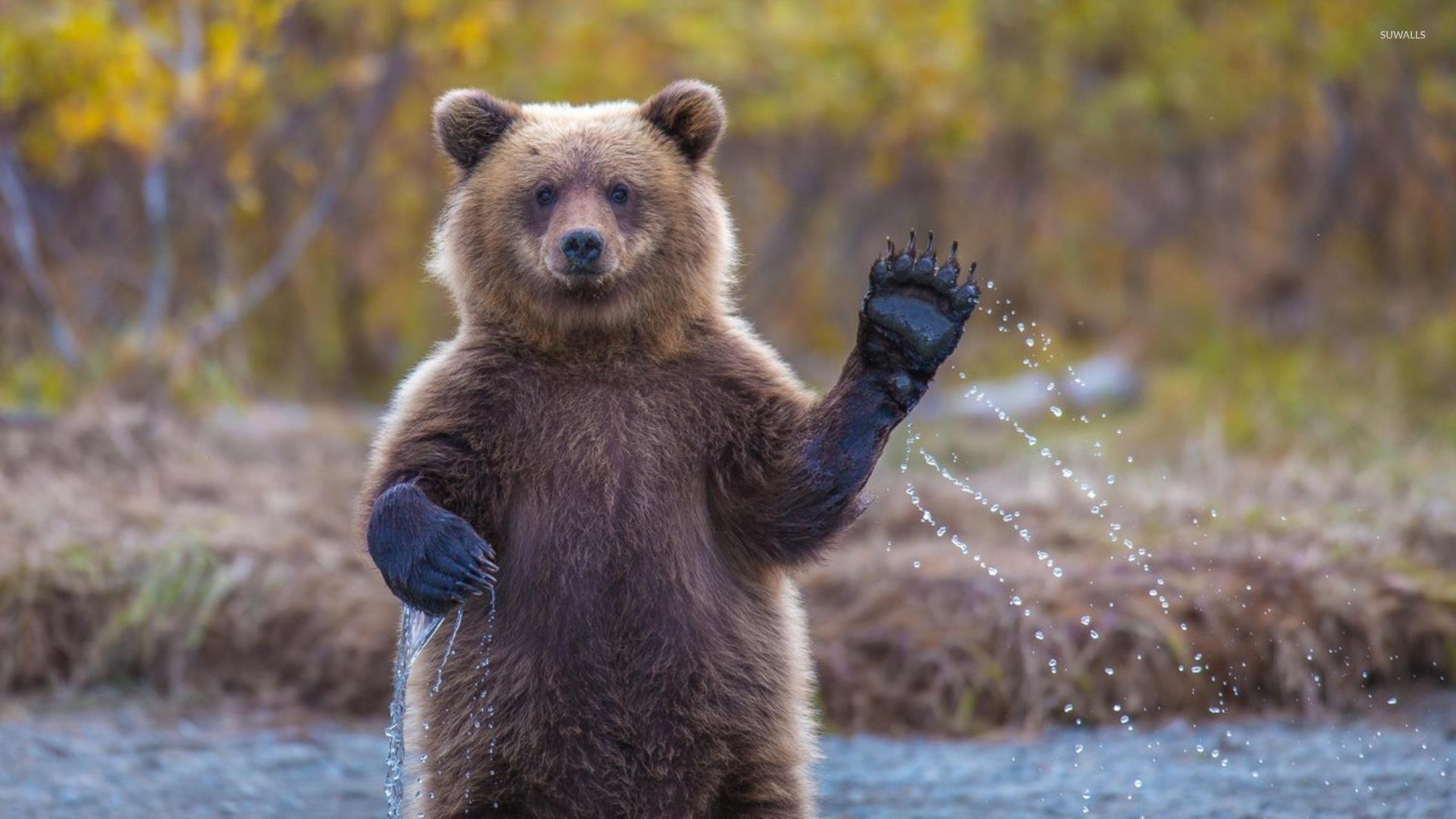 Koala Quotes Wallpapers Bear Cub Wallpaper Animal Wallpapers 33905